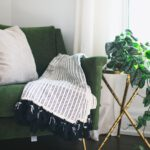De belangrijkste tip voor kamerplanten kopen
